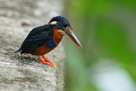 150.000 versi on line, i suoni del mondo animale raccolti in un archivio digitale