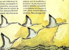 Commentari, trattati e atlanti: on line i manoscritti della Biblioteca Apostolica Vaticana