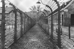 Online 19 milioni di documenti e 1,6 milioni di immagini sulle vittime dell'Olocausto